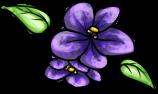forum-violet.png