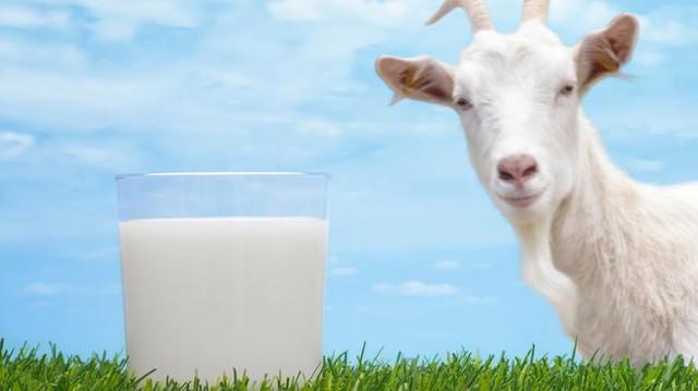 [Image: tak-kalah-dengan-susu-sapi-ini-manfaat-s...084814.jpg]