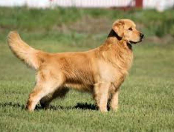 Tips Membangun Kedekatan dengan Anjing Peliharaan