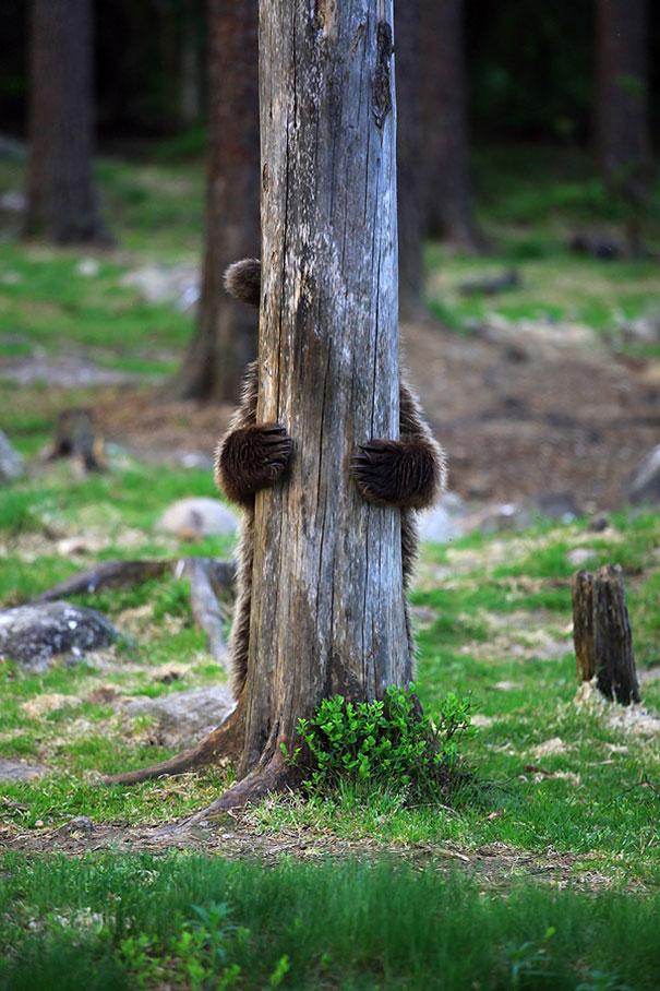 Медведи, такие медведи-16