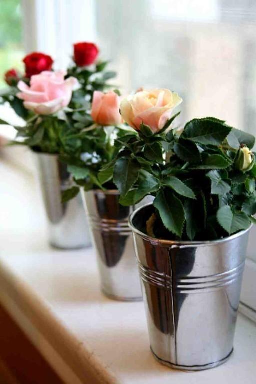 розы в интерьере