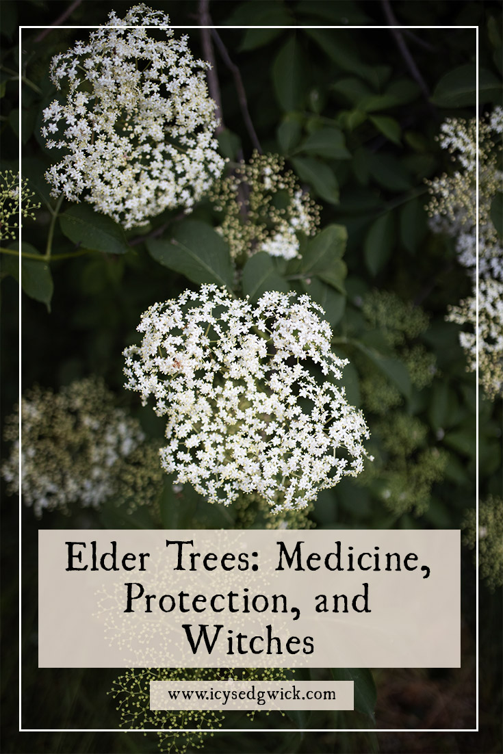 Elder trees are a common sight in the UK. They're also complex, between protection from and for witches. Learn more of their folklore here.