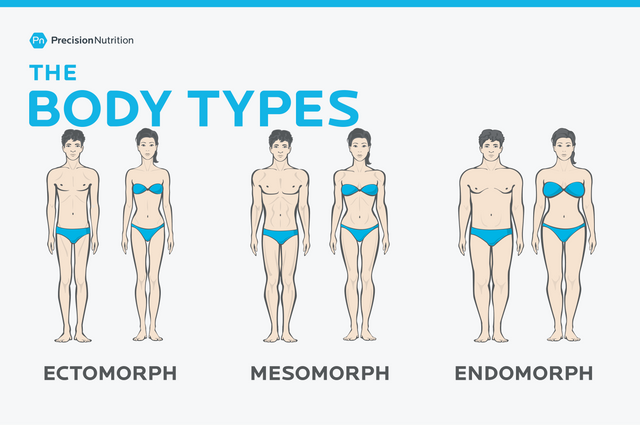 https://i.ibb.co/WPf9CX3/the-body-types-ectomorph-mesomorph-endomorph.png