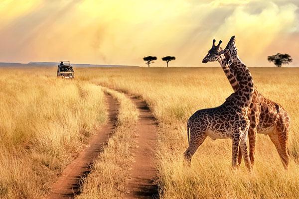 Tanzania Travel Guide Weather