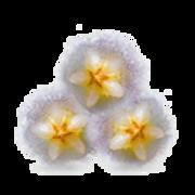 epoch-yin-and-yang-mask-ingredient-porcelaine-flowers-transparent-image