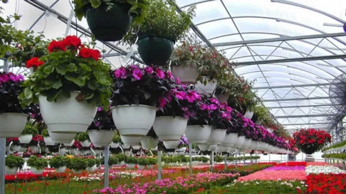 7 Ornamental Plants Predicted to Become Trends in 2021