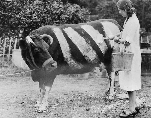 cowpaint.jpg