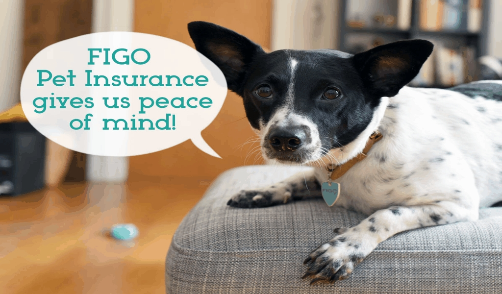 ASK of Pets Insurance