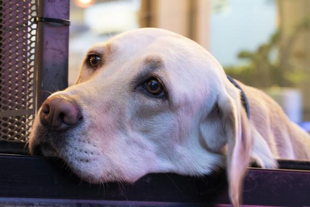 dog-3704098-1920