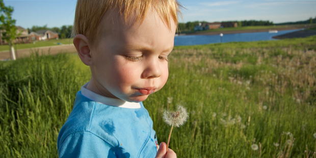 web3-child-boy-blowing-flowers-dandelions-field-grass-nature-bisongirl-flickr