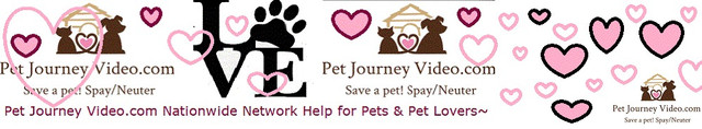Save A Pet - Support Adopt at Animal Shelter - Get Pet Help at Pet Journe Video