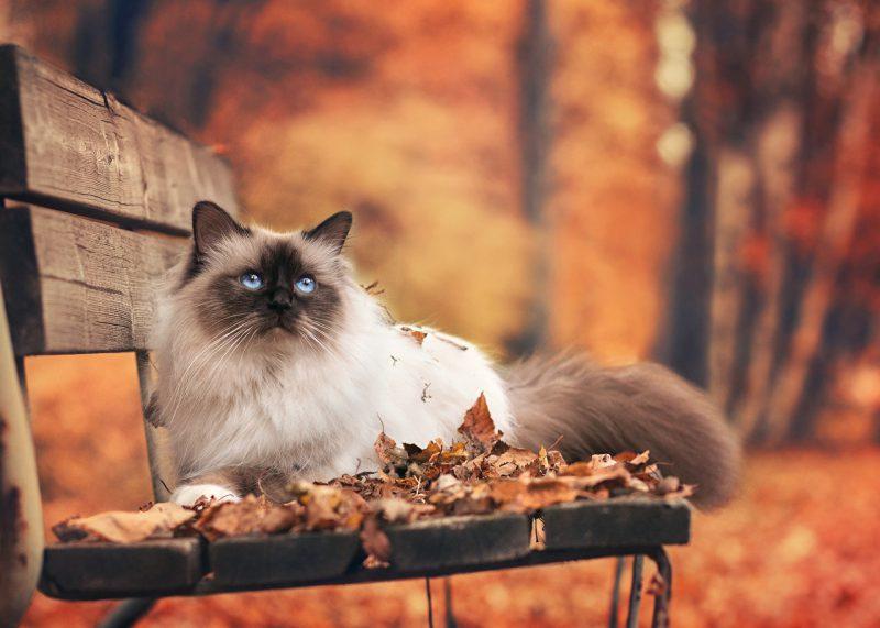 То, без чего настоящая осень невозможна