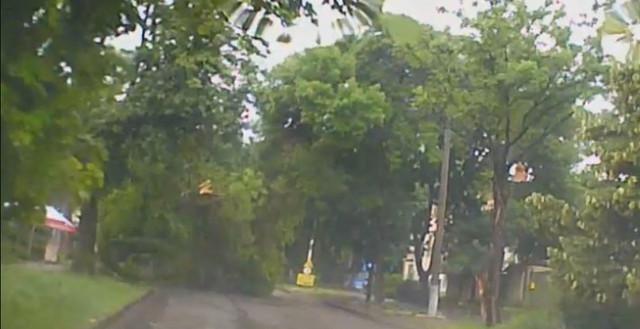 В Николаеве на проезжую часть упало большое дерево