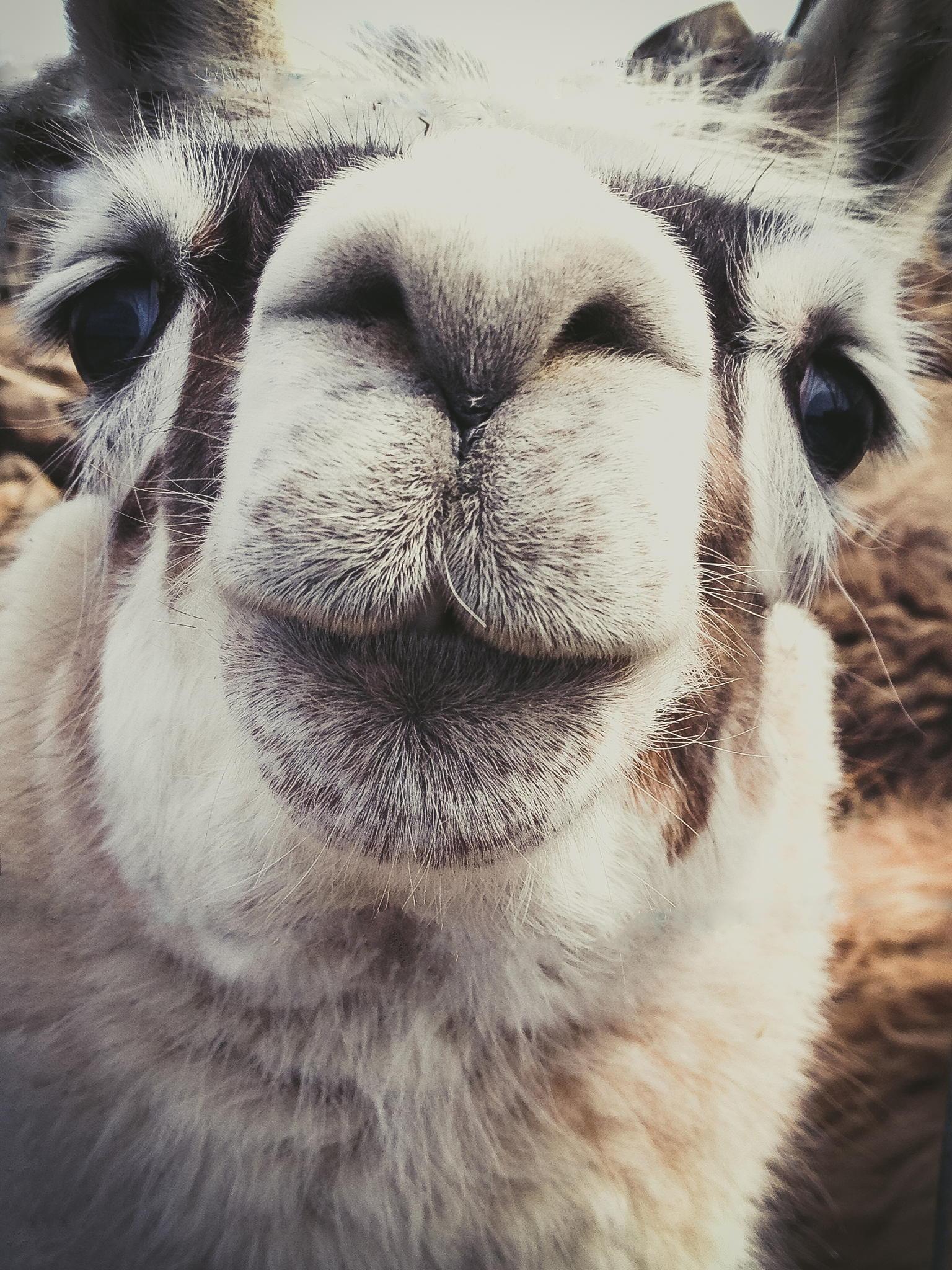 37 фотографий животных, которые вызывают улыбку - 2