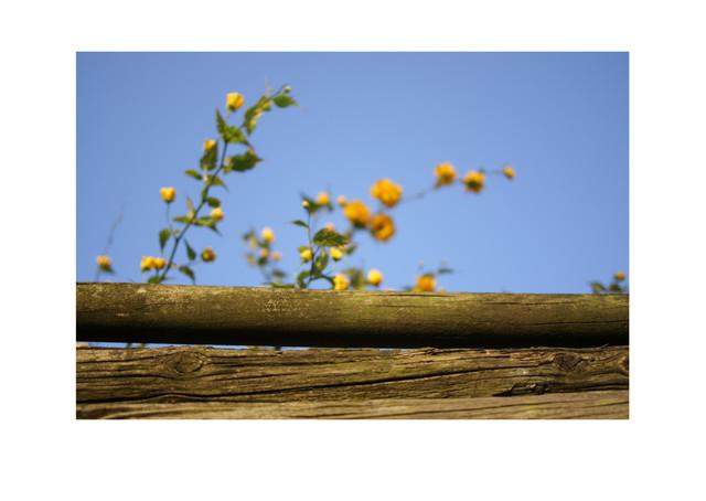 Abril es amarillo_03.jpg