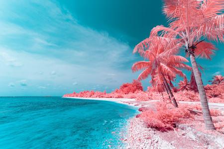 2040473-diego-ricol-recomienda-the-maldives-infraland-maldivas-en-fotografia-infrarroja-y-dron-paolo-pettigiani-1587726455