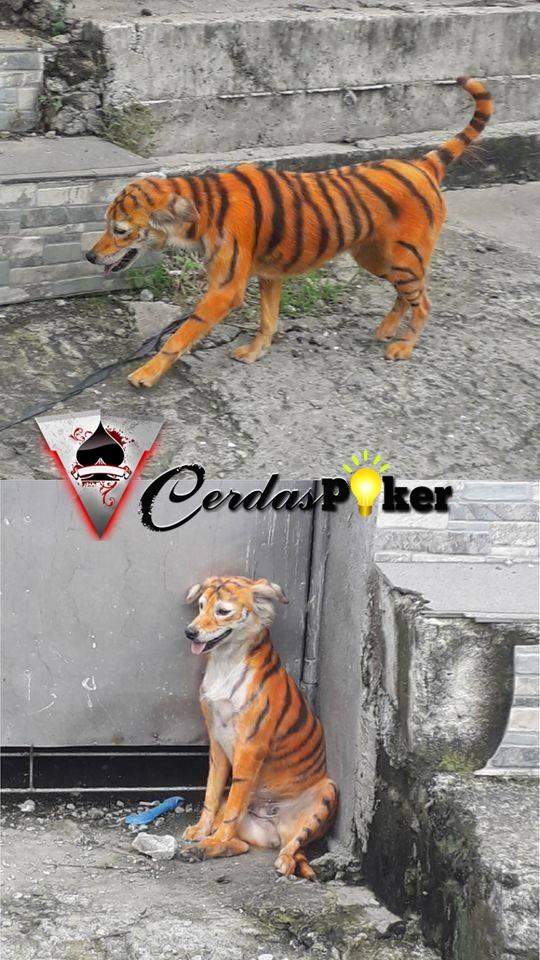 Foto Anjing 'Berbulu Harimau' Memicu Kemarahan Netizen