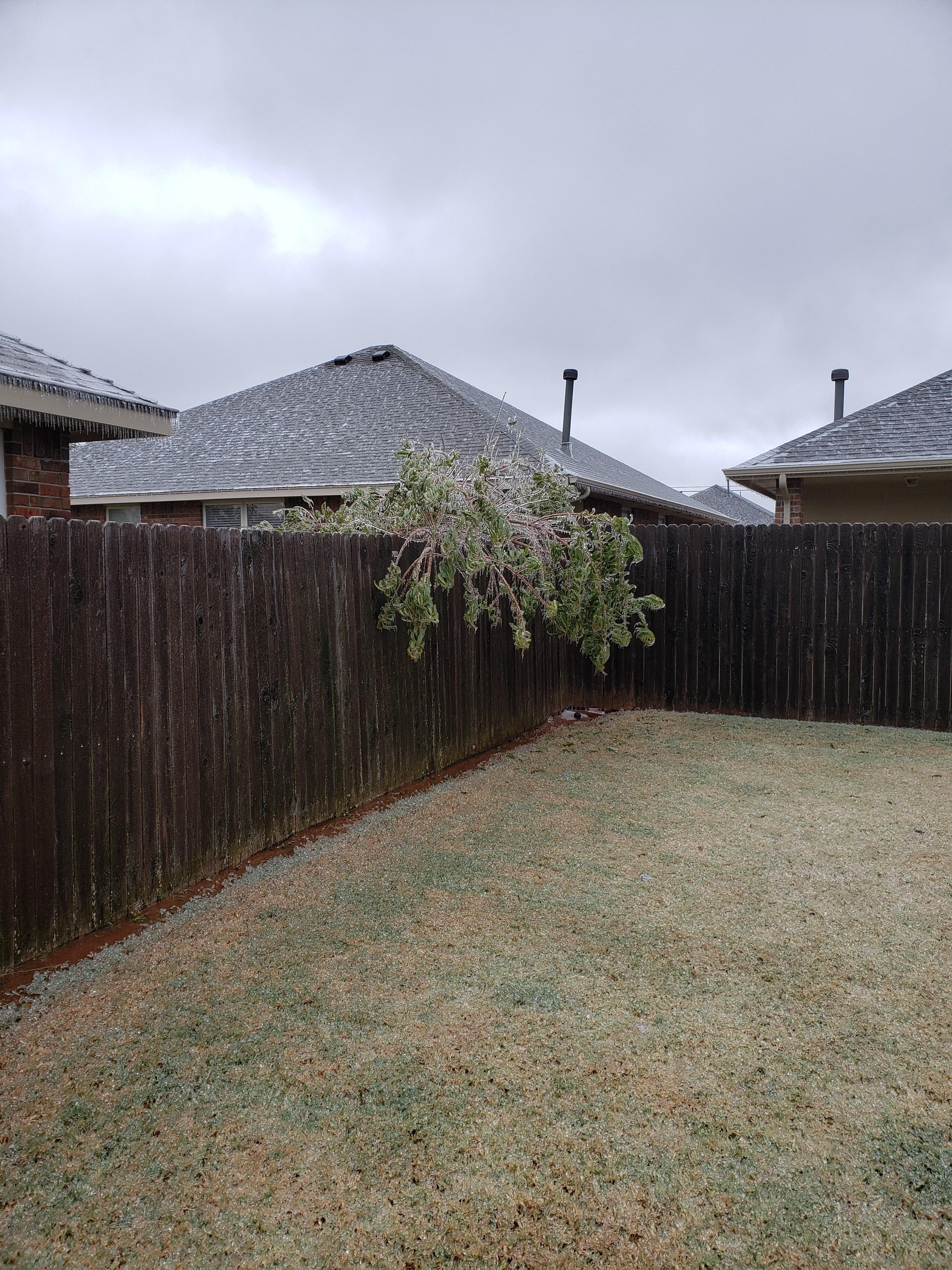 Ice-tree-2.jpg