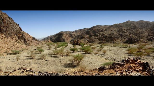 2020 42º Rallye Raid Dakar - Arabia Saudí [5-17 Enero] - Página 2 113