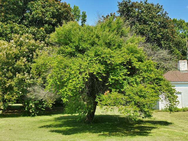 garden-plum-east.jpg