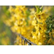 Abril es amarillo_02