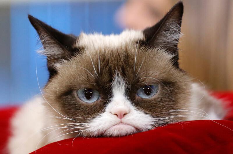 Goodbye Grumpy :(