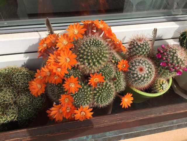 kaktusova-zahradka