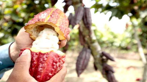san-martin-crece-en-sus-exportaciones-de-cacao-cafe-y-palmito