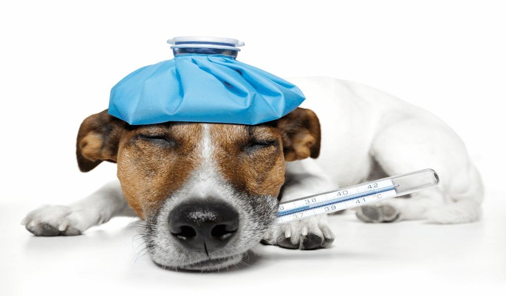 Pet Life Insurance