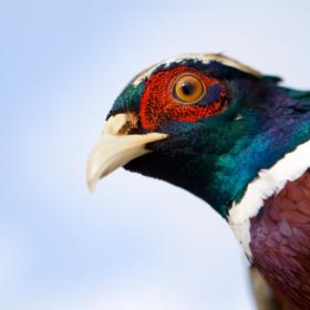 [Resim: symbol-bird.png]