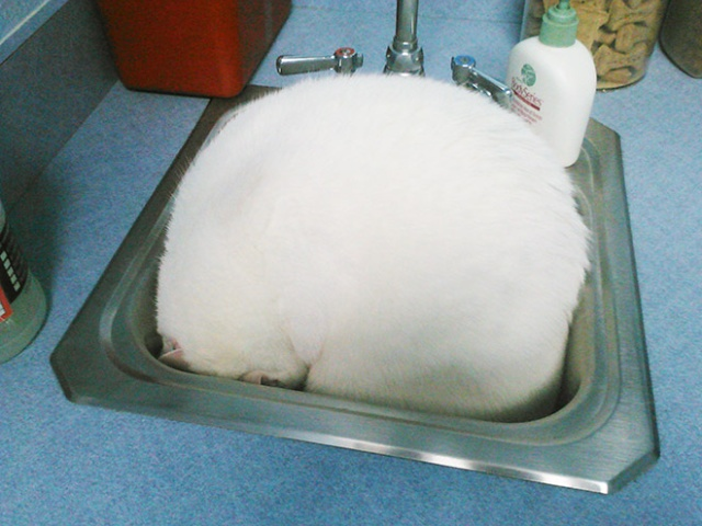 funny-cat-at-the-vet-11