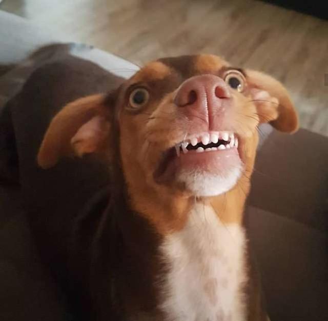 Perro-se-roba-la-dentadura-4