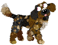 petz-dog-hexie-biscuit-3-15-21