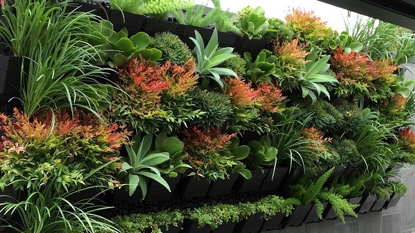 Functions of Plants in the Garden