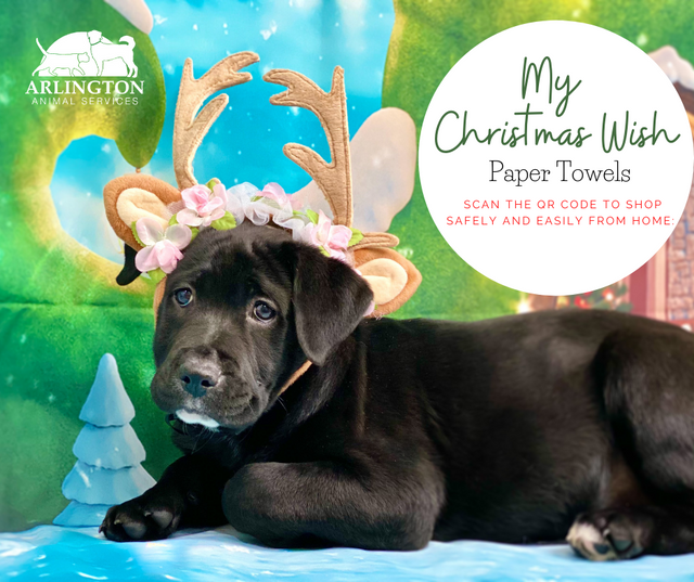 Animal-Services-2020-Angel-Tree-054.png