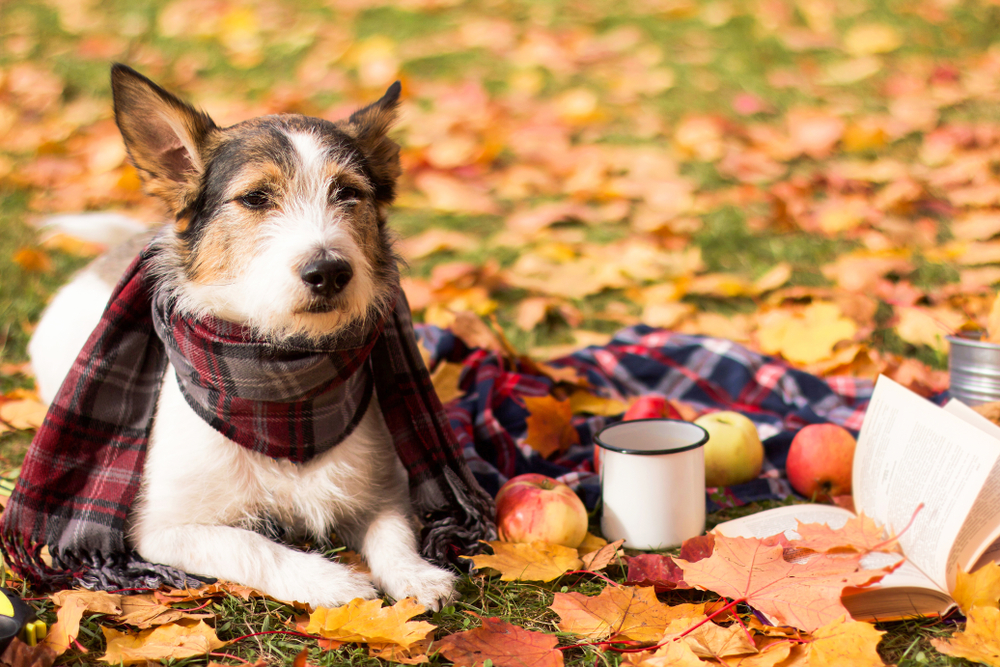 7 Reasons Fall Is the Best Time to Adopt a Dog
