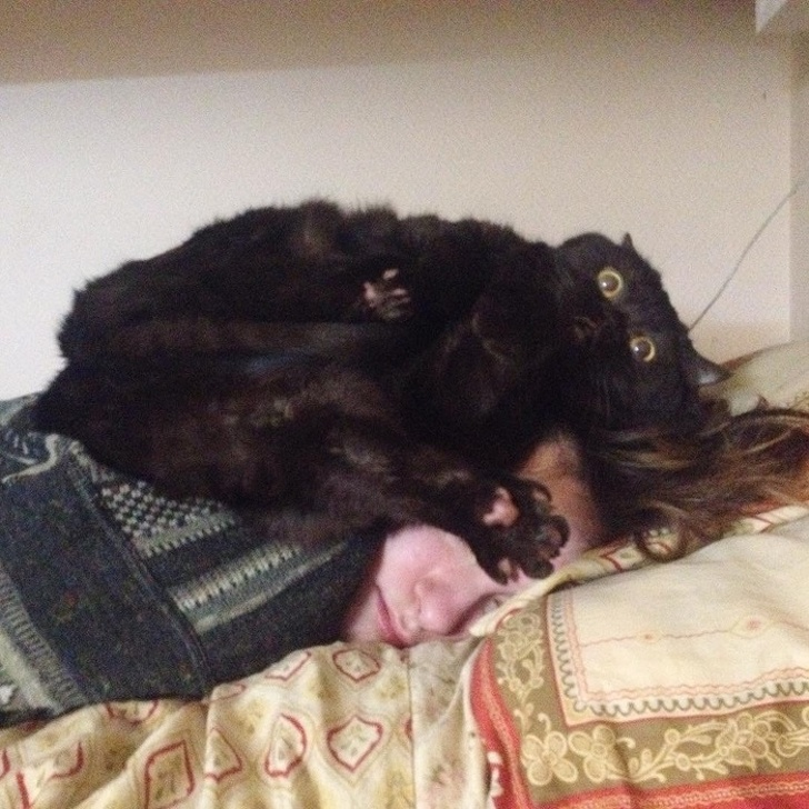 Коты - самые наглые существа на планете