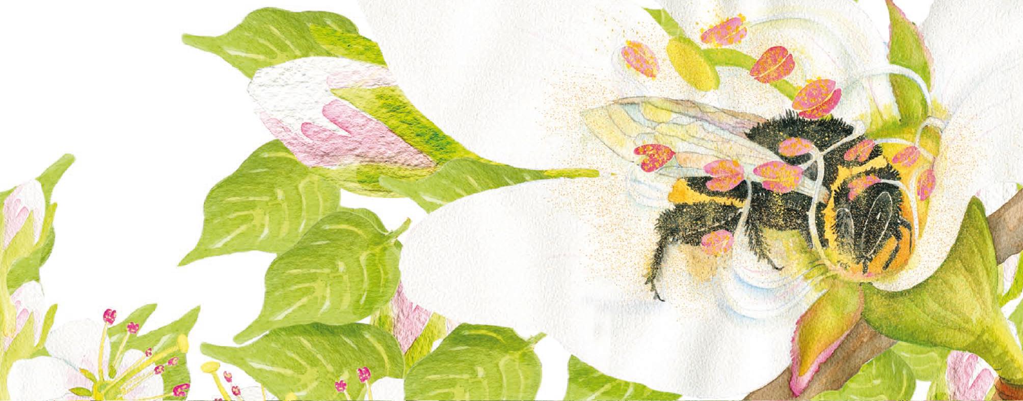 Bild aus dem Buch Pollenküsse