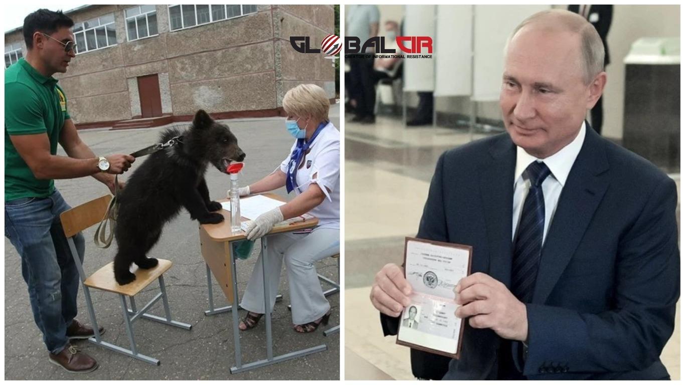 REFERENDUM O USTAVNIM REFORMAMA U RUSIJI: Glasao Putin, ali i medvjedić Glaša!