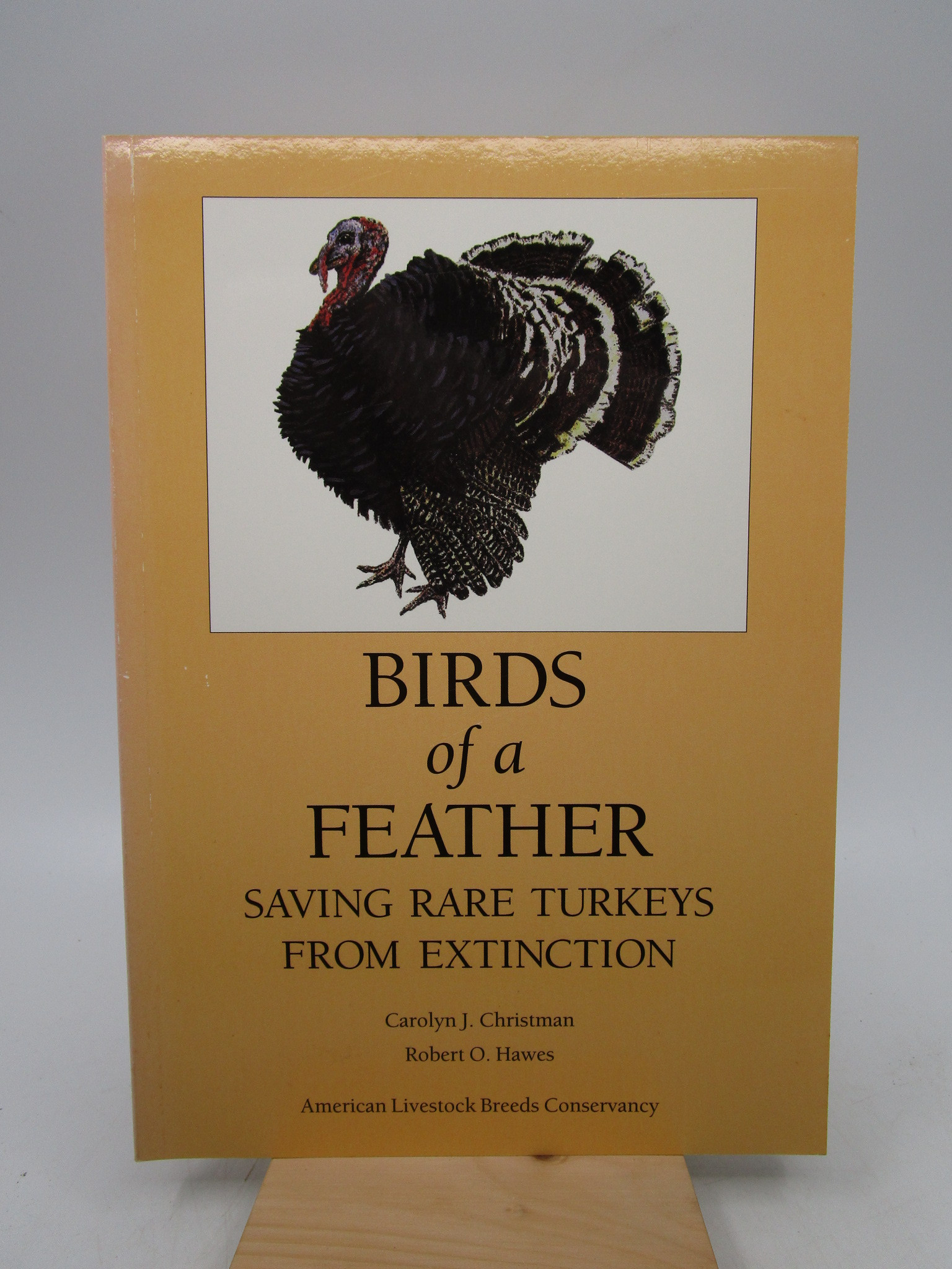 Image for Birds of a Feather: Saving Rare Turkeys from  Extinction (First Edition)
