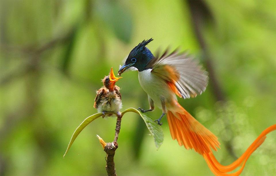 dad-bird-feeds-baby-chick