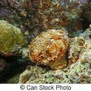 [Image: stonefish.jpg]