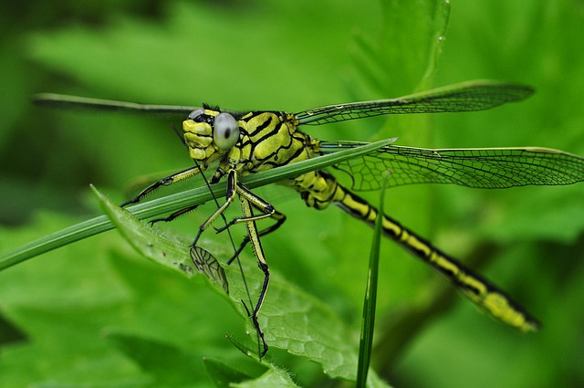 An image of a dragonfly.
