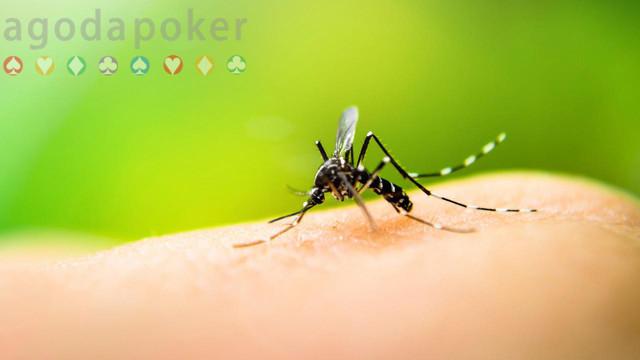 5 Hal Sederhana dari Dapur Obat Bentol dan Gatal Bekas Gigitan Nyamuk