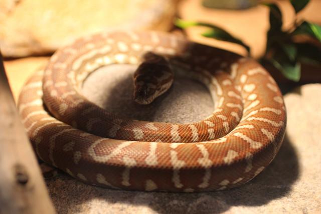 round-snake.jpg