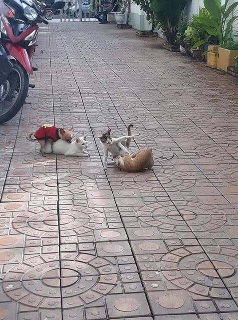 問題:照片裡的貓貓們到底發生了什麼事? Image