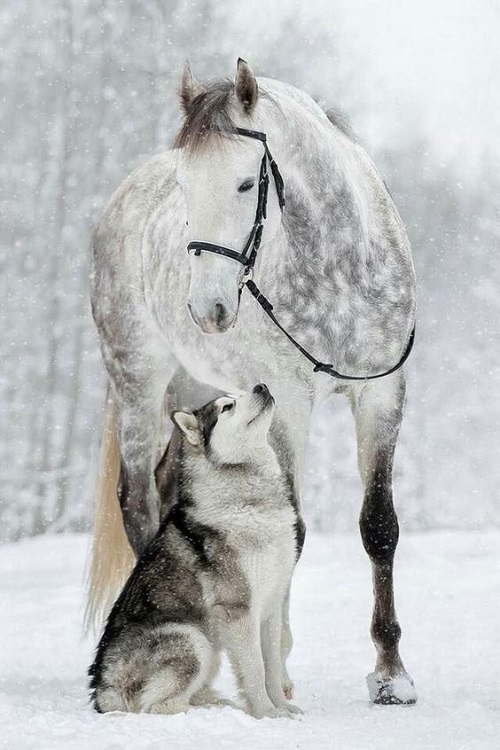 horseanddog