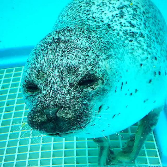 手癢的海豹 Image