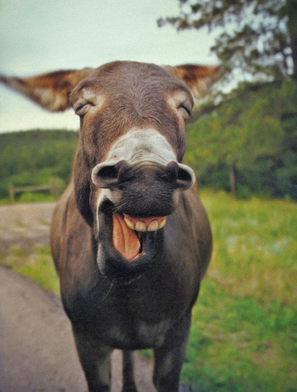 30 фотографий самых счастливых животных на планете-32
