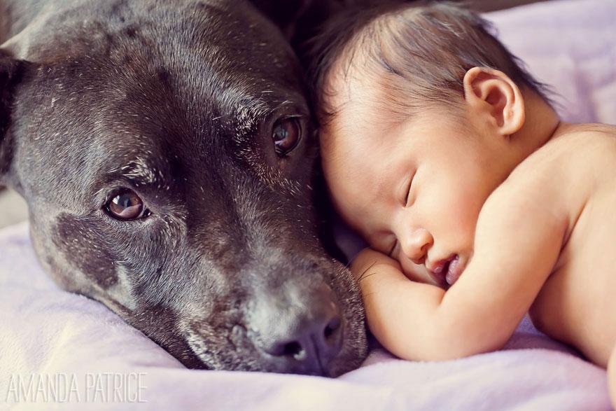 Когда собаки большие, а дети маленькие - 44 потрясающие фотографии - 10